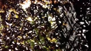 Ash's Diy Algae Turf Scrubber, 125 Gallon Aquarium, No Skim
