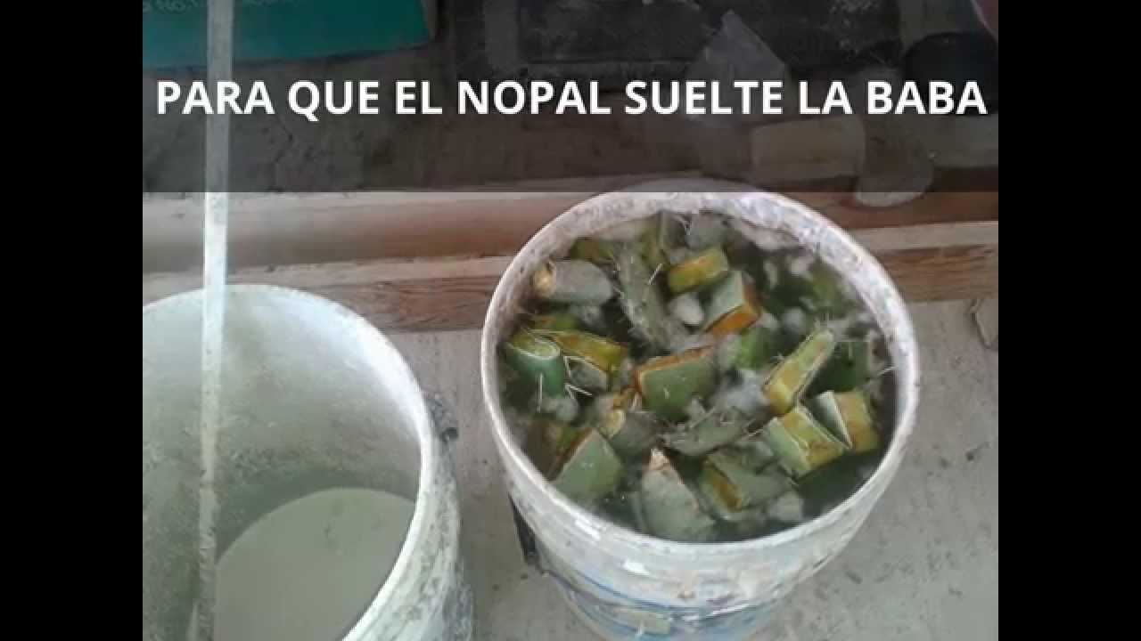 Pintura ecologica de nopal