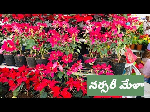 Nursery Mela In Hyderabad | Nursery Mela 2020 | Nursery tour | నర్సరీ మేళా part -2.