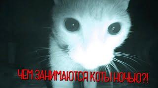 Чем занимаются коты ночью?