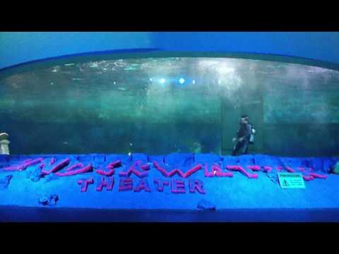 Underwater Theather at Ocean Dream Samudra, Ancol, Jakarta, Indonesia