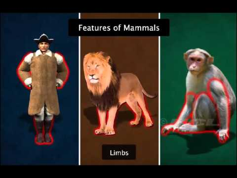 Mammals Birds Insects And Fish