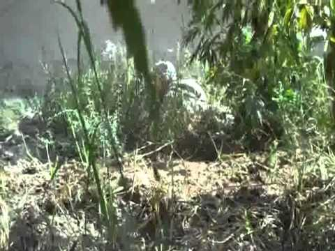 US Marines/Army shootout in Afghanistan Pot Field