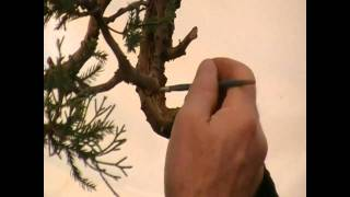 Cleaning & Preserving Deadwood With Lime Sulfur