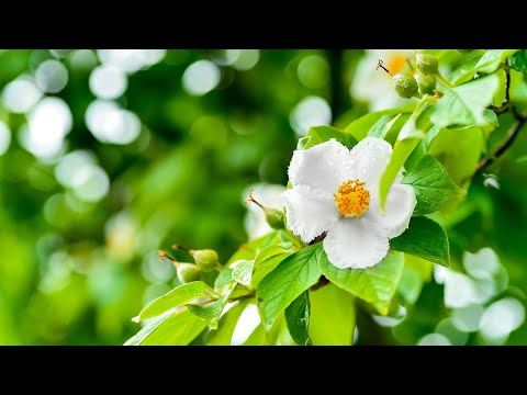 Morning Relaxing Music - Beautiful Piano Music for Stress Relief (Newtown)