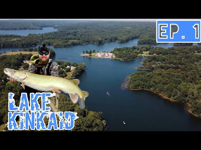 Musky Fishing Southern Illinois Lake Kinkaid Muskies
