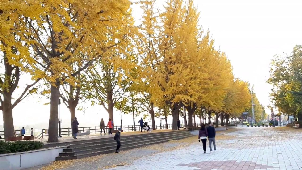 충남 아산 가을여행 현충사 곡교천 은행나무 단풍 길