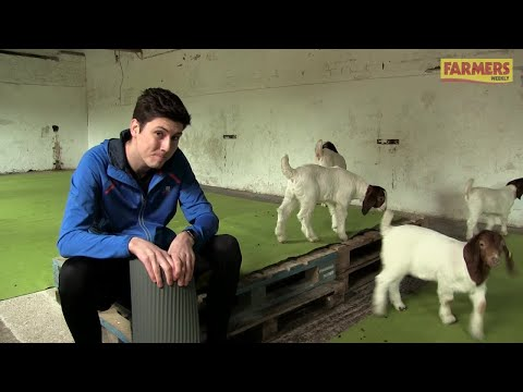 Farmers Weekly's Oli Hill tries goat pilates on a Wiltshire farm