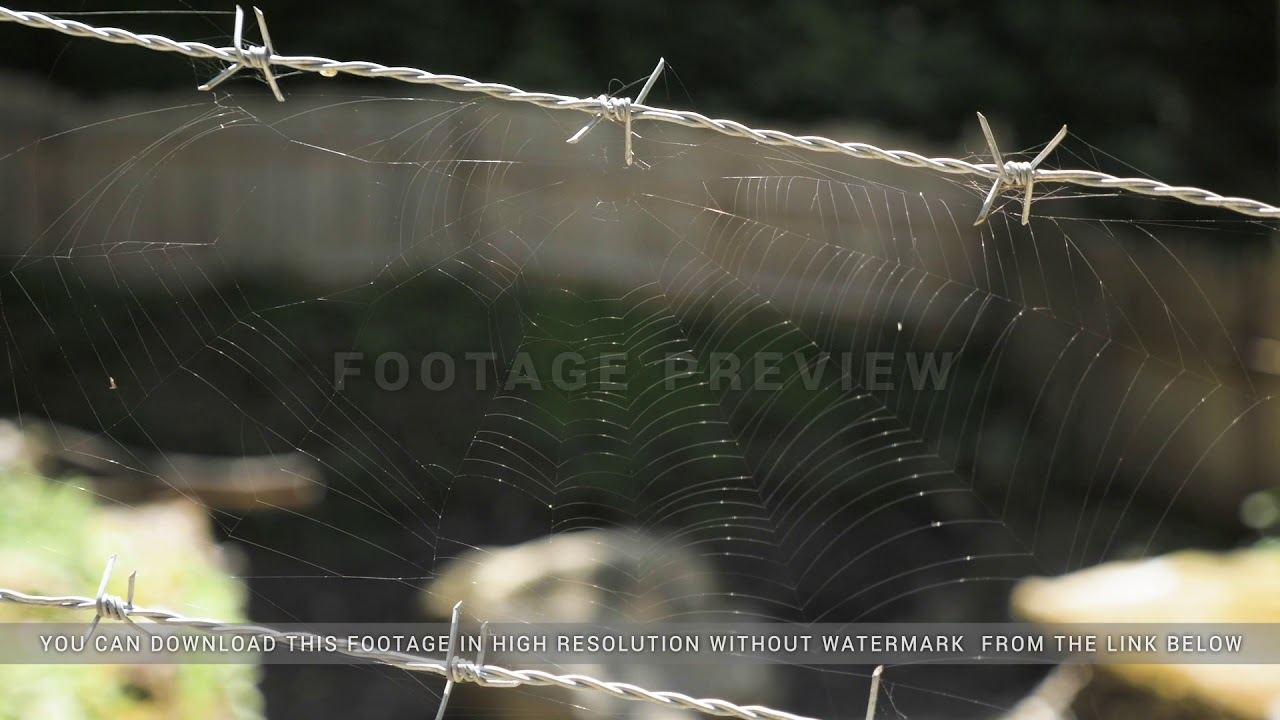 Spider web on barbed wire - YouTube
