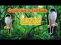 Cendet Pentet Gacor Full Isian  Mp3 - Mp4 Download