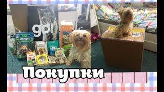 ПОКУПКИ С ИНТЕРНЕТ ЗООМАГАЗИНА//Happy pets