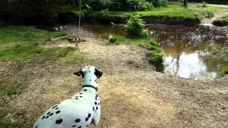 Dogs and the Rope Swing