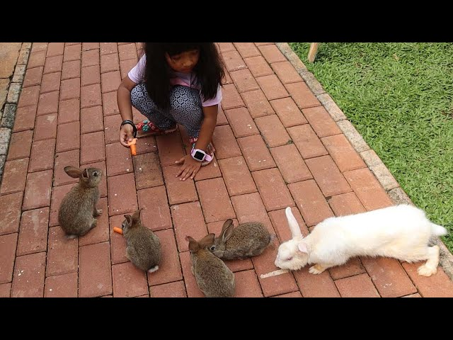 Kasih Makan Kelinci lucu