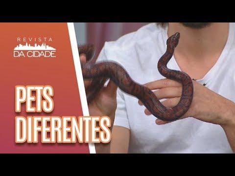 PETS DIFERENTES: Conheça Animais De Estimação Curiosos - Revista Da Cidade (24/04/2018)