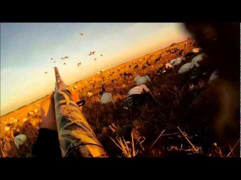 Download Dry Field Mallard Hunt