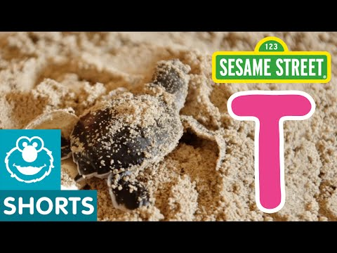 Sesame Street: T Is For Turtle