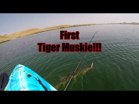 Kayak Fishing For My First Tiger Muskie!!! Healy Reservoir, Outside Buffalo Wyoming.