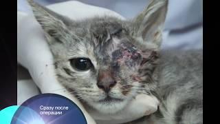 Удаление глазного яблока у кошки 3 мес