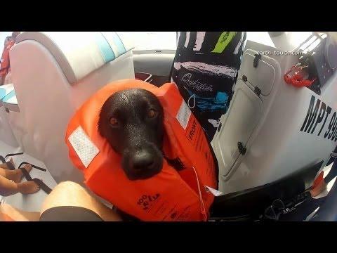 0 Cachorro nadando com os golfinhos