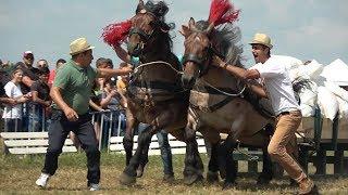 Concurs cu cai de tractiune Ruseni, Satu Mare 22 Iunie 2019
