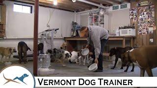 Vt Dog B'n'b Feeding Time, 15 Dogs