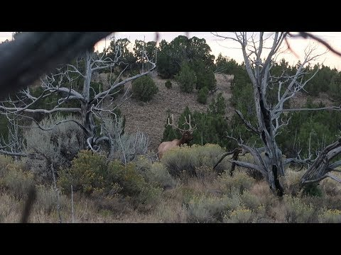 BULL ELK IN OPEN COUNTRY - EP 31 - LAND OF THE FREE