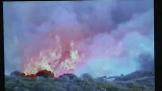 EGE en feu de Foret : Palasca