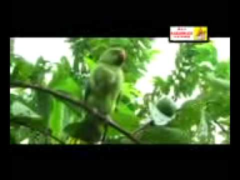khortha video songs(1).mp4