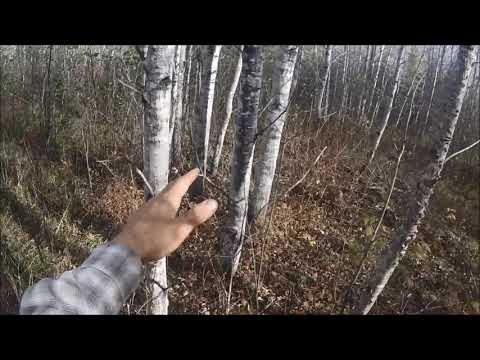 Wild Flush Grouse Kill