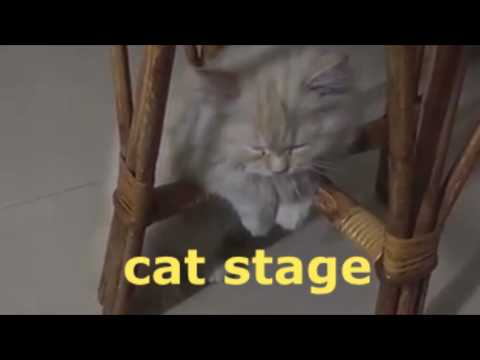 Cat Stage   its time to sleep