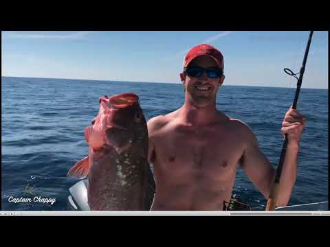 How To Find Red Grouper In The Gulf Of Mexico