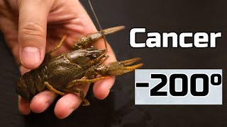 Will Crayfish Survive in Liquid Nitrogen?