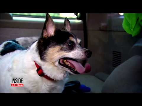 How to Keep Dogs Cool in the Car On a Hot Day