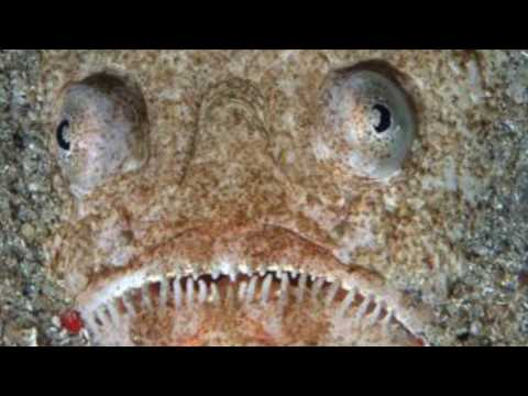 HALLOWEEN SPECIAL: THE TOP 5 SCARIEST FISH IN THE WORLD (HD)