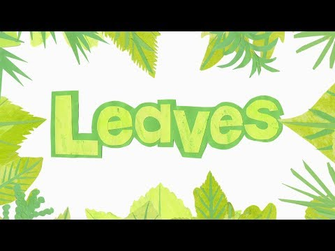 Leaves Names - Leaf shapes (Learn to Identify Trees from their Leaves)