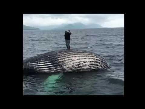 wiggle. whale dance 2