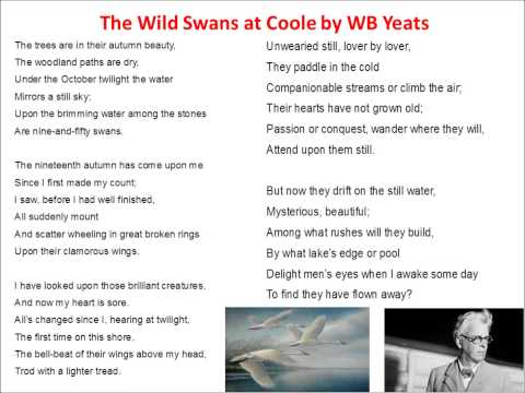 two poem comparisons the wild swans The title, the wild swans at coole, refers both to swans in the wild and the place where they enjoying being wild: coole park, in ireland the poem itself describes a number of natural features and is about both the beauty of nature and about the energy that characterizes the natural world.