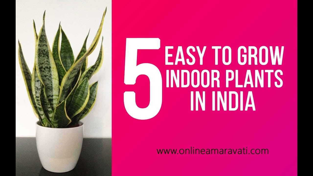 5 easy to grow indoor plants in india youtube for Small easy to grow plants