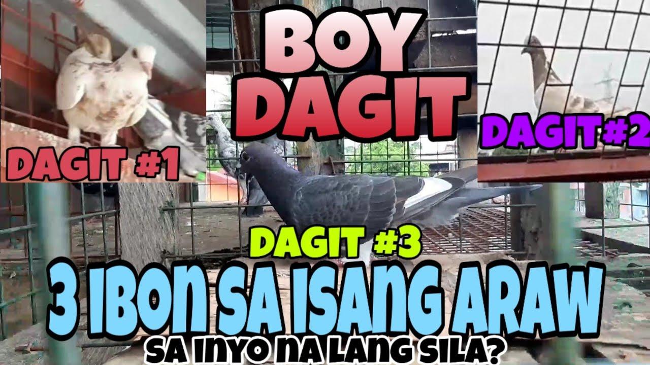 Dagit King!3 ibon sa isang araw, breeding cages project pra mag breed ng mga nadadagit natin hehehe!