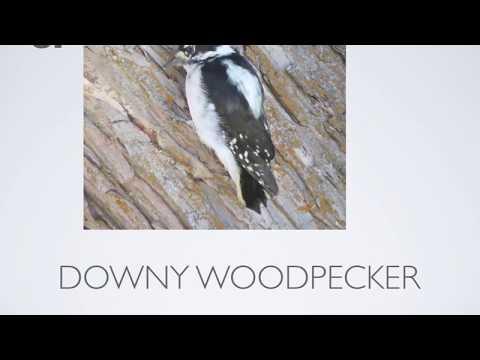 Top Ten Birds in Washington State