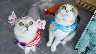 给猫买个扭蛋机-连开30次竟全是猫衣服-猫-我有种不祥的预感