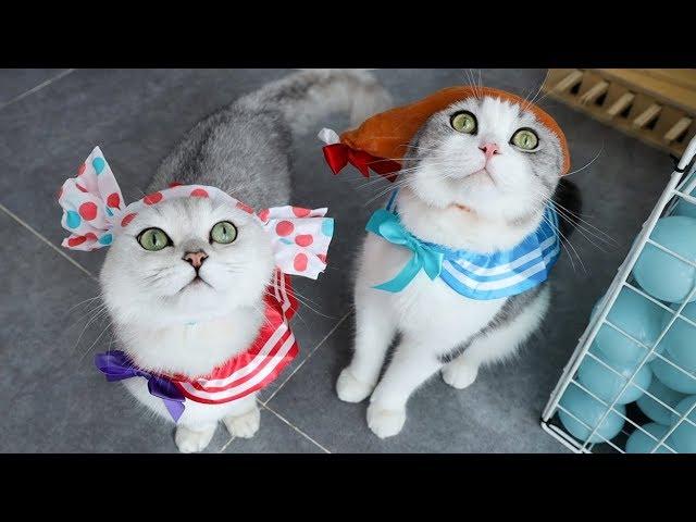 给猫买个扭蛋机,连开30次竟全是猫衣服,猫:我有种不祥的预感……