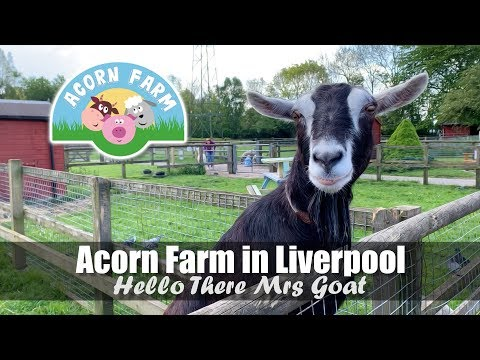 Acorn Farm In Liverpool | Meet Lonie The Goat | Friendly Farm Animals - Sheep, Pigs, Goats & Rabbits