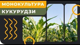 Фото Монокультура кукурудзи. Нова система Овсінського. Запитай Оксану. GrowEx