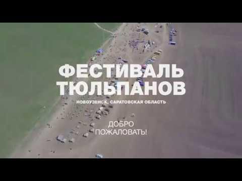 Фестиваль тюльпанов в Новоузенском районе, Саратовская область