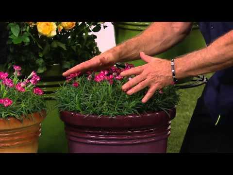 Cottage Farms Dazzling Design 6-piece Fragrance Garden with Carolyn Gracie