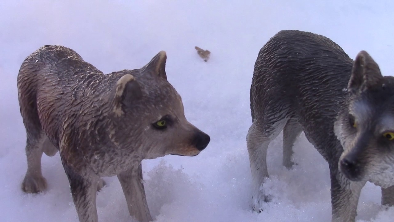 Download United and Divided: The Omega Among Alphas (A Schleich Wolf Pack) Ep.1