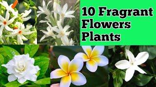 Top 10 Fragrant Aromatic Flowers / Best Fragrant / Scented Flower Plants !! By Priya Sarkar