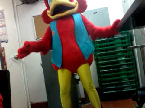 red robin bird dancing youtube