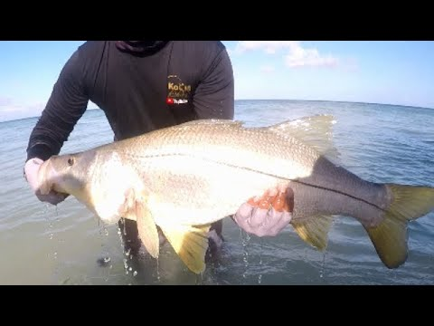 TOP 5 CATCHES OF 2019 - Fishing In Trinidad & Tobago, Caribbean - KoS M Fishing